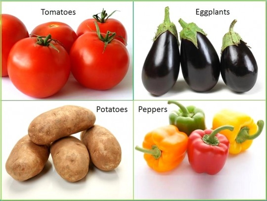 Tomato, Potato, Eggplant, Bellpepper, Onion and Garlic: To Eat or Not?